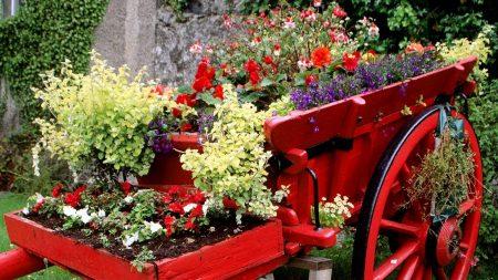flowers, flower bed, cart