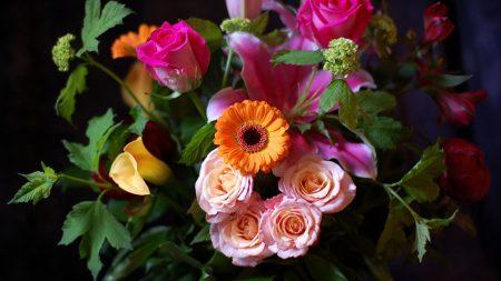 flowers, flower, black background