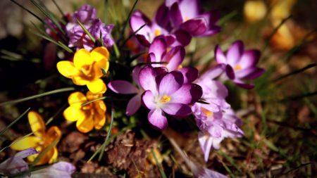 flowers, flower, grass