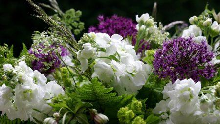 flowers, flower, green