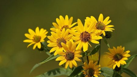 flowers, flower, yellow