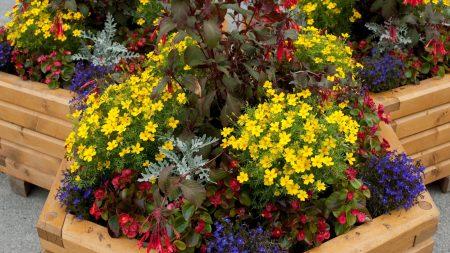 flowers, flowerbed, beauty