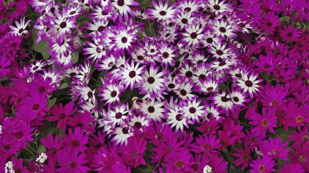 flowers, flowerbed, bright