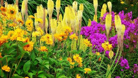 flowers, flowerbed, colorful