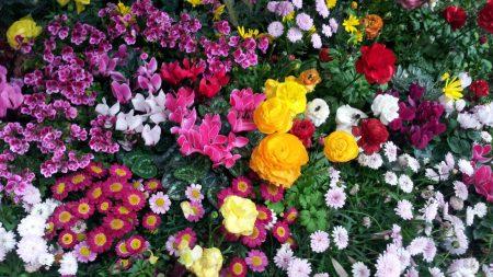 flowers, flowerbed, flora