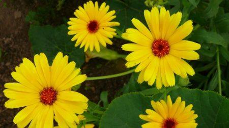 flowers, flowerbed, green