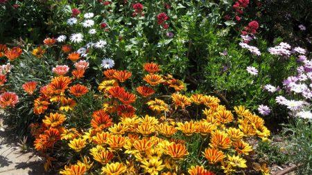 flowers, flowerbed, summer