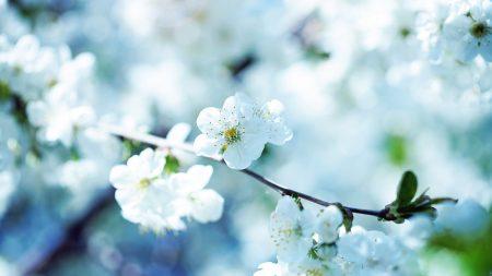 flowers, flowering, branch