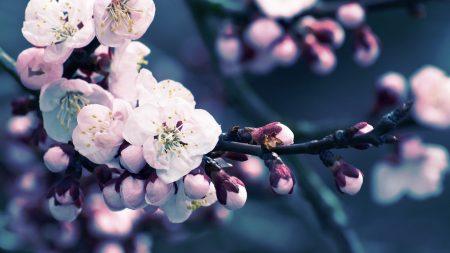 flowers, flowering, plant