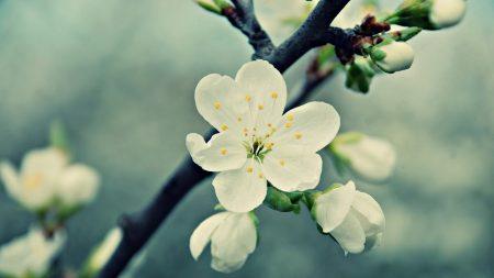 flowers, flowering, plants