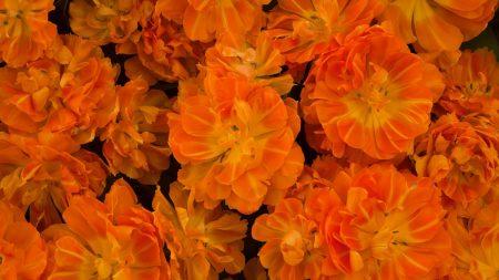 flowers, flowing, bright