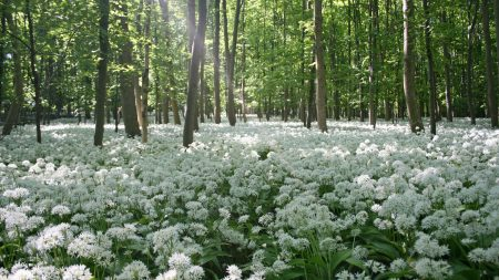 flowers, forest, trees