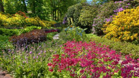 flowers, garden, beds