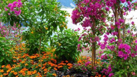flowers, garden, sea
