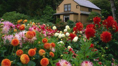 flowers, garden, trees