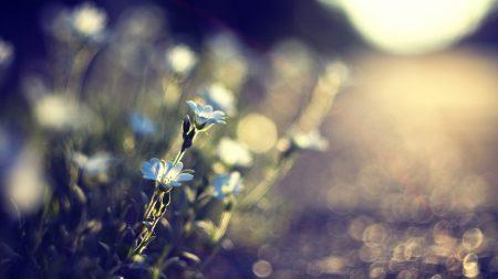 flowers, glare, blurred