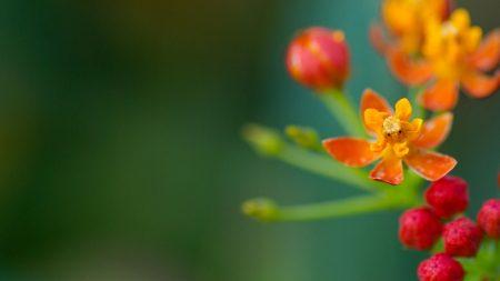flowers, glare, stem