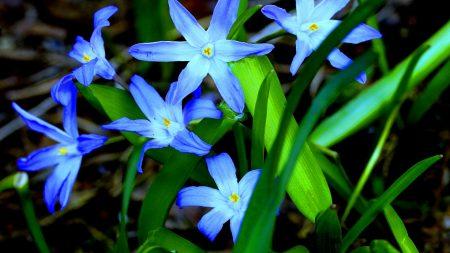 flowers, grass, flora