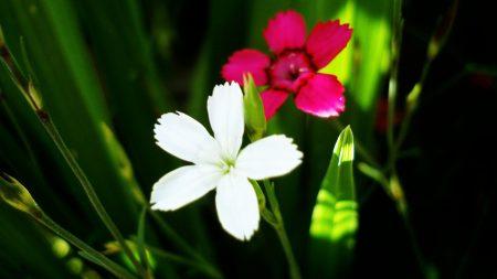 flowers, grass, green