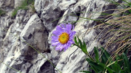 flowers, grass, rocks