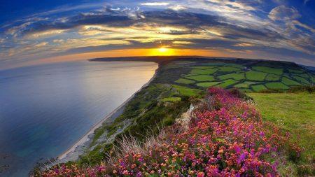flowers, grass, sea
