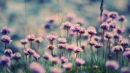 flowers, grass, summer
