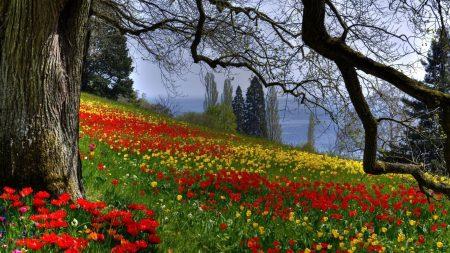 flowers, grass, trees