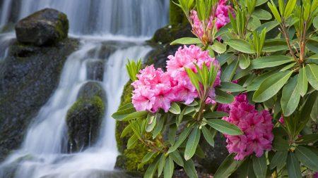 flowers, greenery, waterfalls