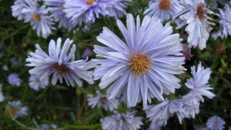 flowers, herbs, flowerbed
