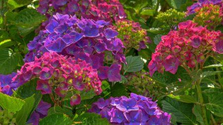 flowers, herbs, leaves