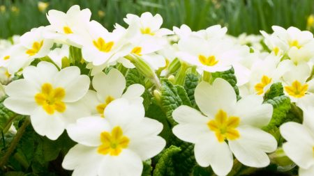 flowers, herbs, many