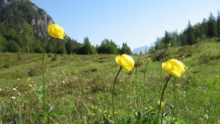 flowers, herbs, nature