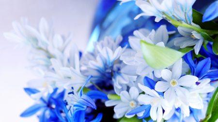 flowers, herbs, plants