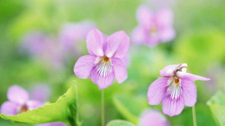 flowers, herbs, spring