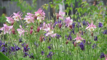 flowers, herbs, summer