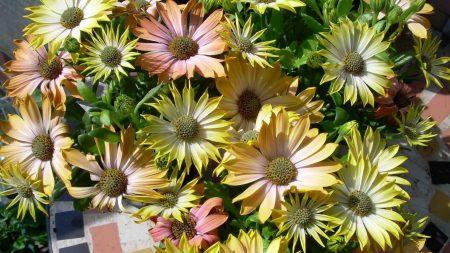 flowers, herbs, sun