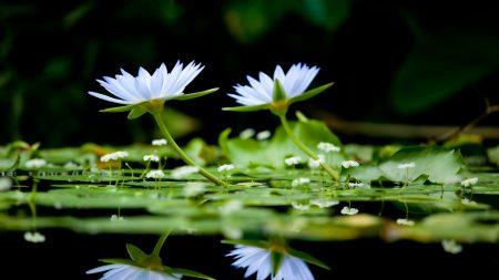 flowers, herbs, water