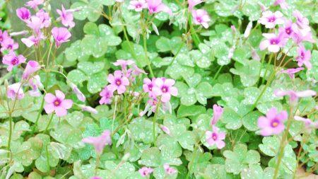 flowers, lawn, green