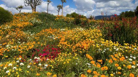 flowers, lawn, many