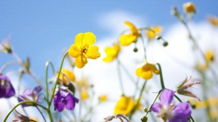 flowers, lawn, sky