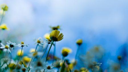 flowers, lawn, summer