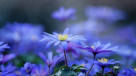 flowers, leaves, petals