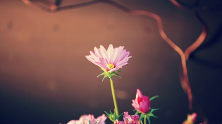 flowers, leaves, softness
