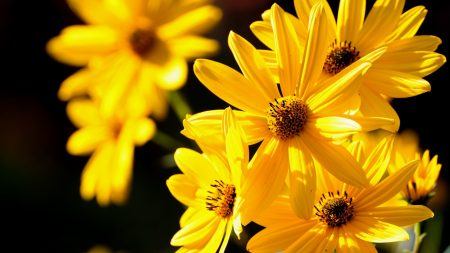 flowers, light, petals