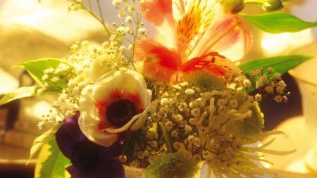 flowers, lilies, flower