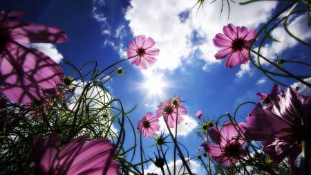 flowers, meadow, beams