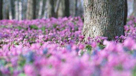 flowers, meadow, wood