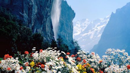 flowers, mountains, cliff