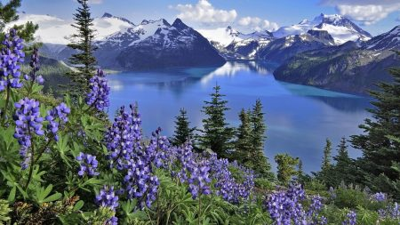 flowers, mountains, lake