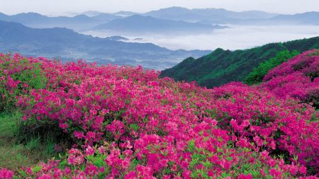 flowers, mountains, pink